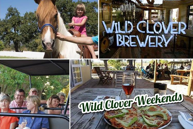 wild-clover